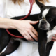 pet wellness exams jupiter florida
